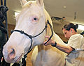 Caisson welcomes new horses DVIDS494869.jpg