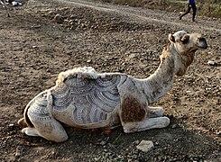 Camel hair art.jpg