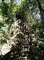 Caminos empinados en el cerro del Macuiltépec.jpg