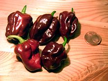 Capsicum chinense habanero chocolate fruits.jpg