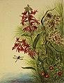 Cardinal Flower SAAM-1970.355.338 1.jpg