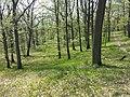 Carex praecox sl28.jpg