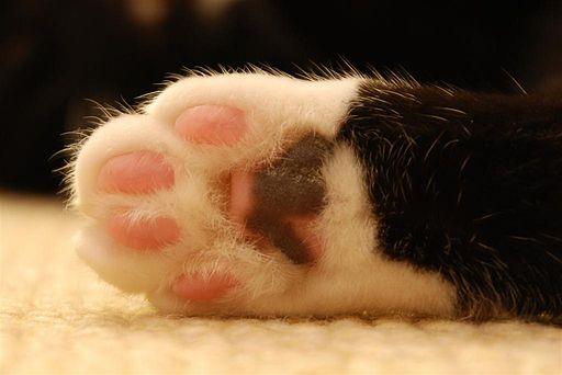 Cat paw (cloudzilla)