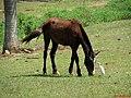 Cavalo e Garça branca em perfeita harmonia na entrada de Pradópolis. - panoramio.jpg