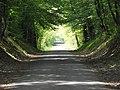 Caverne arboricole - panoramio.jpg
