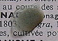 Celadon sherd02.jpg