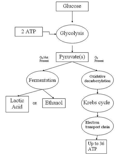 Describe Atp List Its Building Blocks