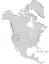Cercocarpus ledifolius range map 0.png