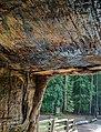 Chandelier Drive-Thru Tree, California (32706764602).jpg