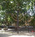 Chanukkiyah - Tempio Maggiore di Roma.JPG