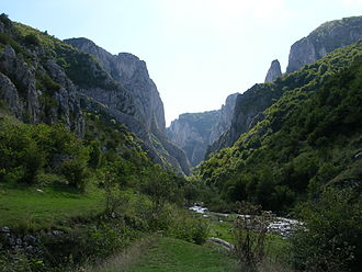 Flora of Romania - More than 1,000 plant species can be found in the Cheile Turzii reserve