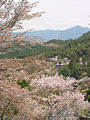 Cherry blossoms at Yoshinoyama 04.jpg