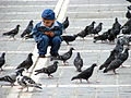 Child Plays with Pigeons - Central Square - Brasov - Romania.jpg