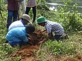 Children planting in Chalakudy River bank.JPG