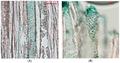 Chlorociboria pigment - Jof-03-00015-g002.png