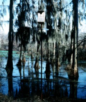 Choctaw National Wildlife Refuge - Image: Choctaw NWR2
