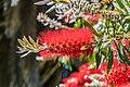 Christchurch Botanic Gardens 03.jpg