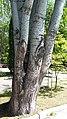 Circular-Park-Yerevan 16.jpg