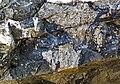 Clast-rich impact pseudotachylite (Sudbury Breccia, Paleoproterozoic, 1.85 Ga; Crab Lake South roadcut, south-southeast of Cartier, Ontario, Canada) 11 (46818332765).jpg