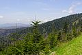 Clingmans-dome-spruce-fir-tn1.jpg