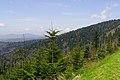 Clingmans-dome-spruce-fir-tn1.jpg