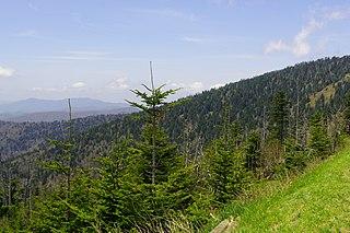 Southern Appalachian spruce–fir forest