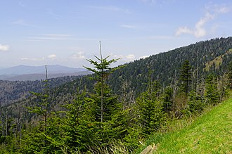 Southern Appalachian spruce–fir forest - Spruce–fir on the slopes of Clingmans Dome