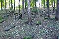 Cmentarz żydowski w Będzinie21.jpg