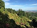 Conca dei Rododendri a giugno - Burcina.jpg