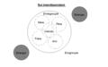 Conception interdépendante du moi (inspiré de Heine, 2008).png