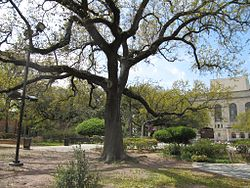 Congo Square New Orleans.jpg