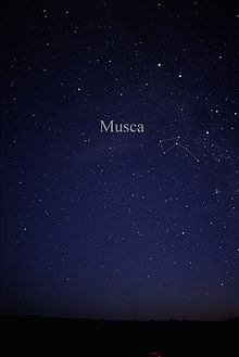 Constellation Musca.jpg