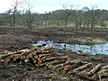 Controlled felling - geograph.org.uk - 1136638.jpg