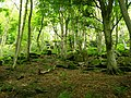 Craggy Plantation - geograph.org.uk - 1325821.jpg