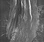 Crillon Range, valley glacier terminus mostly covered in rocks, August 22, 1968 (GLACIERS 5337).jpg