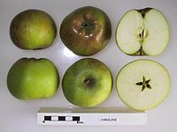 Cross section of Caroline, National Fruit Collection (acc. 1946-108).jpg