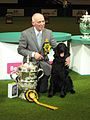 Crufts dog show 2011 (8651772483).jpg