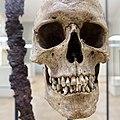 Cultural History (historisk) Museum Oslo. VIKINGR Norwegian Viking-Age Exhibition 14 Grave find Nordre Kjølen, Solør. Sword Spear Axe Arrows Skull (woman 155 cm 18-19 years old. Female warrior? Kvinnelig kriger?) Late 10th c. 4813.jpg