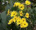 Cupplants.jpg