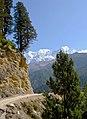 Cupressus torulosa, Kali Gandaki Valley near Kokhethanti, Nepal.jpg
