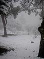 Curico, la nevada del 2007, cerro Condell (10029571523).jpg