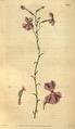 Curtis's Botanical Magazine, Plate 3075 (Volume 58, 1831).png