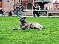 Cuzco (Peru) (15085741442).jpg