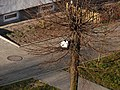 Cwany kocur -) - panoramio (2).jpg