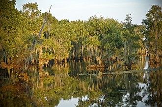 Lake Bistineau State Park - Image: Cypress Trees in Lake Bistineau State Park