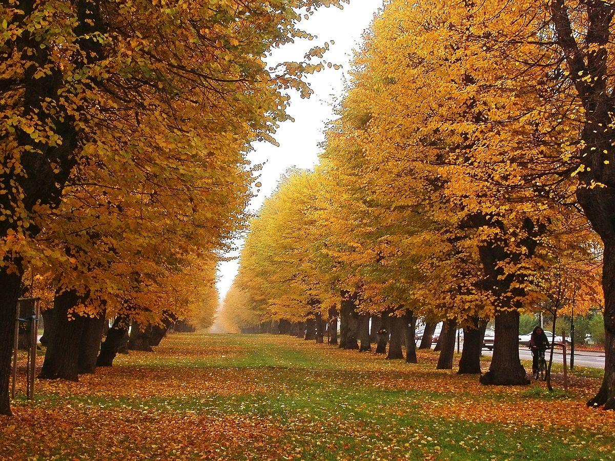 Jese wikip dia for Immagini autunno hd