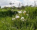 Dülmen, Weide am Naturschutzgebiet -Welter Bach- -- 2014 -- 0020.jpg