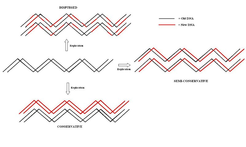 DNA Replication Theories Map2.jpg