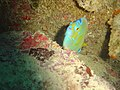 DSC00254 - peixe - Naufrágio e recifes de coral no Nilo.jpg