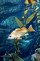 DSC08844 - Ripley's Aquarium (36823375230).jpg